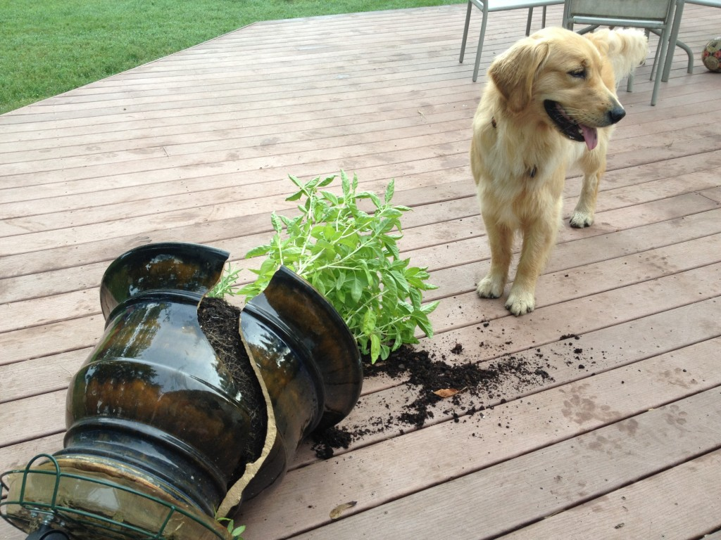 Seva & Cash broke my pot.